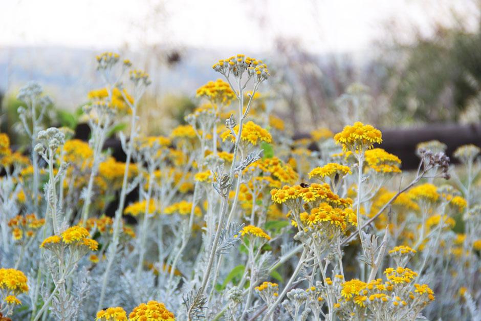 fleurs-aragon