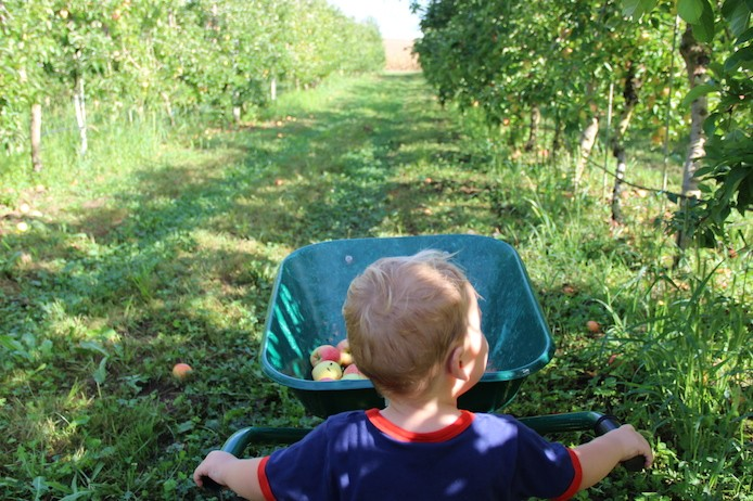 Cueillette de pommes au Domaine Darmandieu dans les Landes.