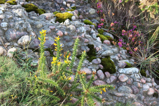 fleurs-sarres-la-rhune