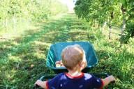 landes-cueilette-pommes
