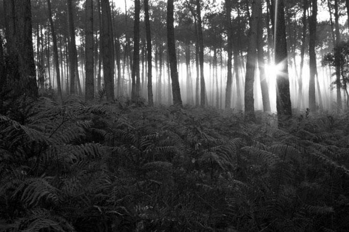 Forêt des Landes par Céline Hamelin