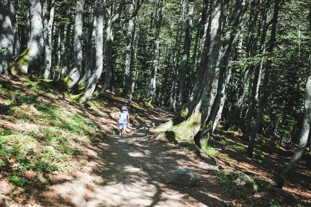 Forêt de la Randonnée des lacs d'Ayous dans les Pyrénées en Vallée d'Ossau