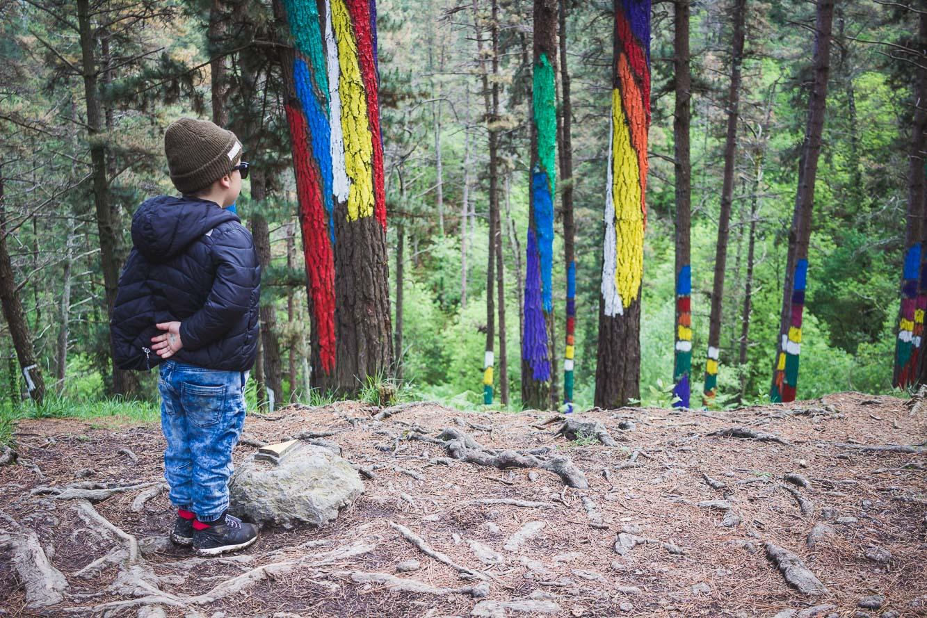 Balade dans la forêt peinte du Bosque de Oma au Pays basque espagnol.