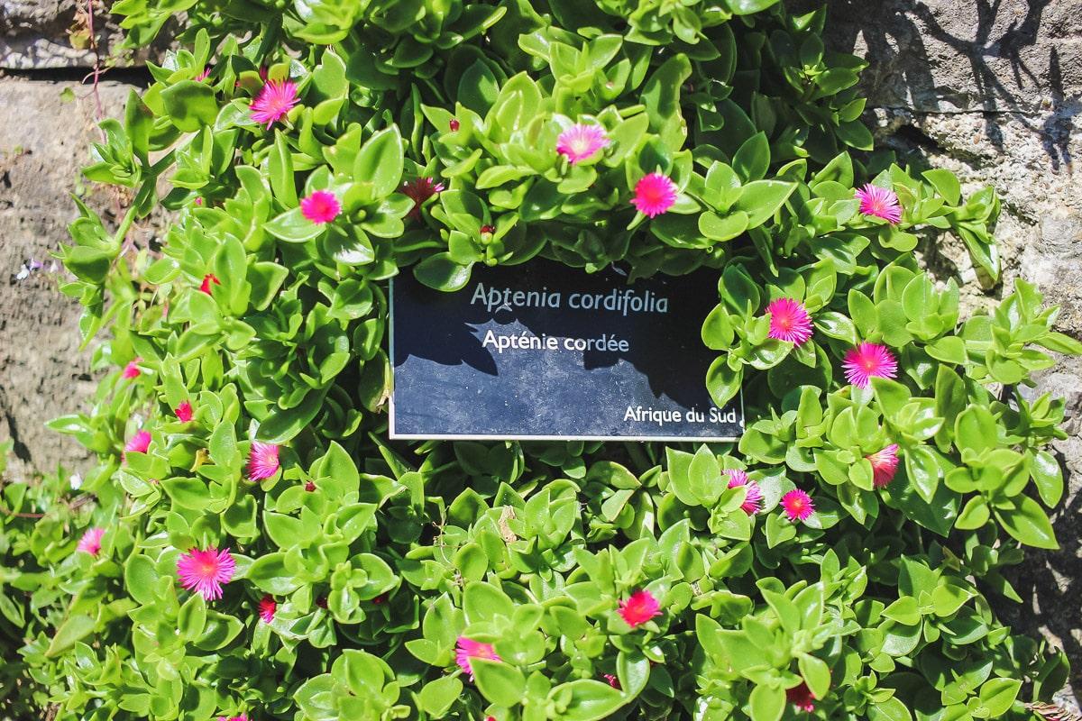 Le jardin botanique dans les Remparts à Bayonne au Pays basque pour une activité en famille.