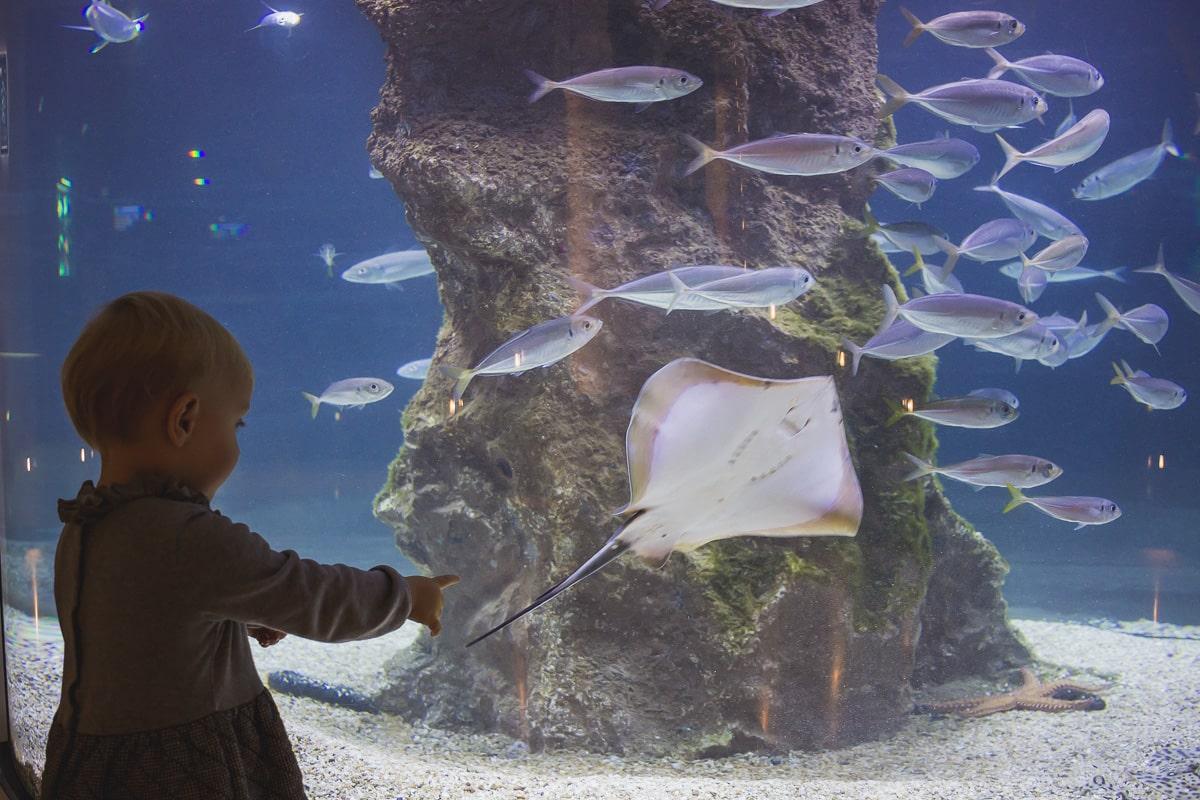 Aquarium Biarritz : 5 bonnes raisons de le (re)visiter !
