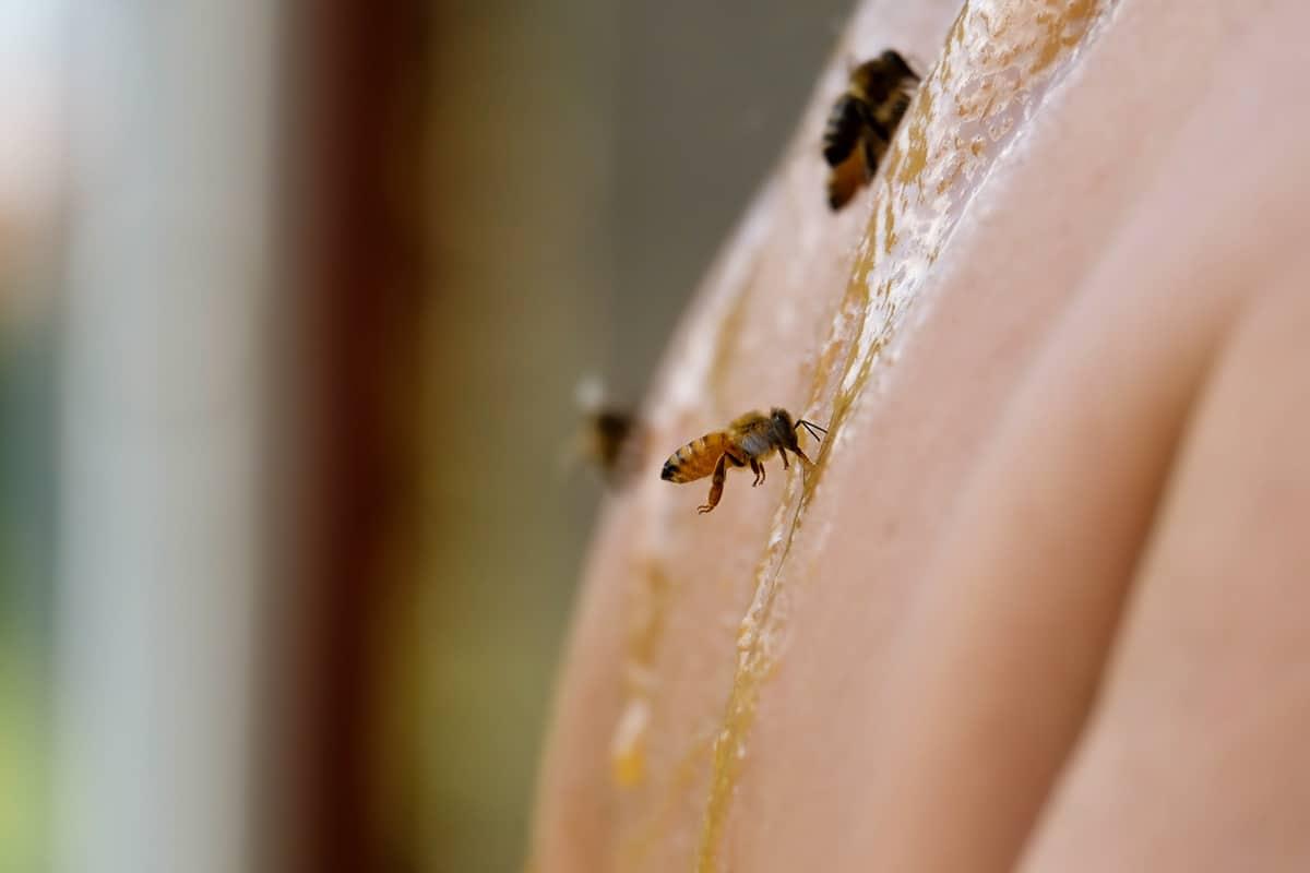 Ballot-Flurin : «les abeilles produisent de l'or mais vous ne le savez pas encore…»